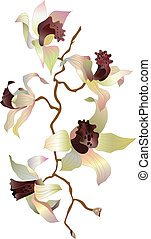 orchid branch 1 - orchid branch on white background
