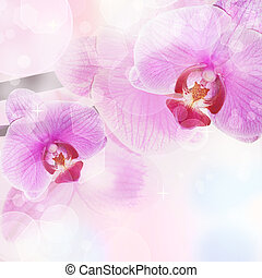 Orchid Flower background, tender blur colors and bokeh
