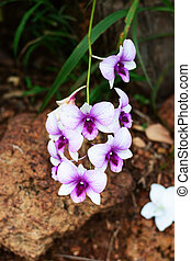 Orchid flower beautiful and chill out