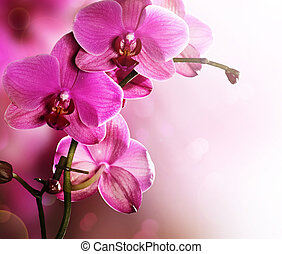 Orchid Flower border design