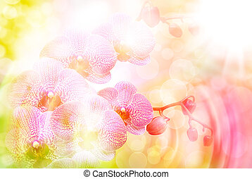 Orchid flower close up - Close up of beautiful plant orchid...