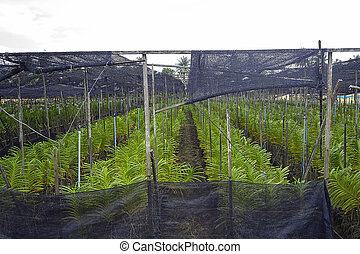 orchid flower farm