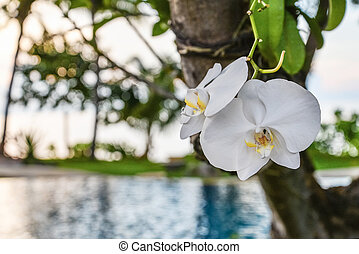 Orchid flower in garden at winter day