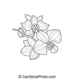 Orchid Flower Monochrome Drawing For Coloring Book