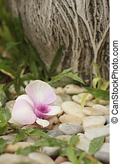 Orchid flower on the background of rocks in garden