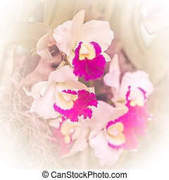 Orchid flower soft focus background