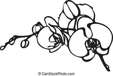 Orchid flower - vector drawing of orchid flower