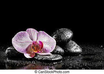 Orchid flower with zen stones on black background