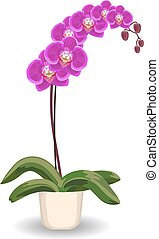 Orchid flowerpot on white background.