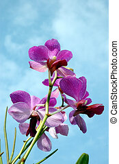 orchid flowers against a background of blue sky
