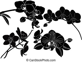 orchid flowers collection isolated