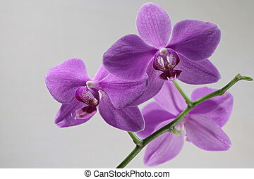 orchid flowers macro shot