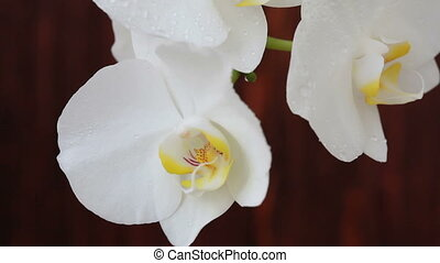 Orchid flowers with water drops aft