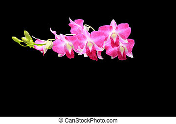 orchid group and bud branch