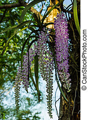 Orchid growing on tree