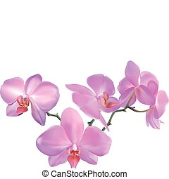 orchid Illustration - Photorealistic illustration of a ...