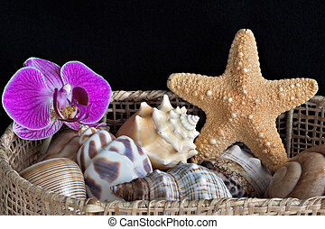 Orchid in a basket of seashells