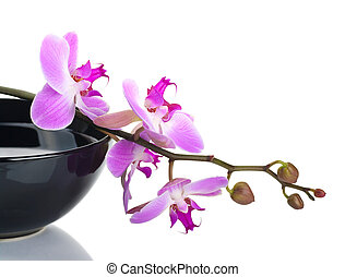 Orchid in a black bowl on a white background