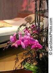 orchid in bedroom