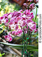 Orchid in the garden background