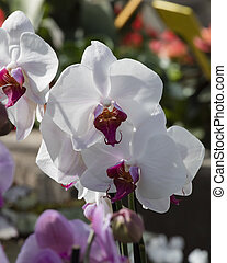 orchid in the garden