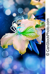Orchid on a blue background with bokeh