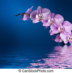 Orchid On Blue With Reflection