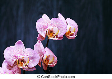 Orchid On Dark