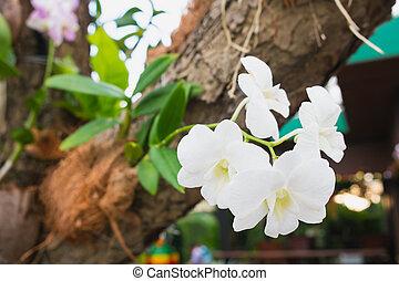 Orchid on tree. Symbol of Elegance.