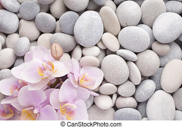 Orchid. - Orchid on a stone surface. Studio photography.