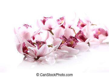 Orchid over white background