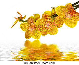 Orchid petals reflecting in water