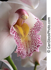 Orchid pillar in color