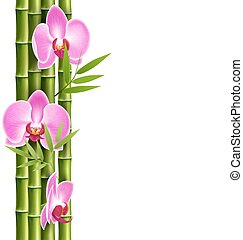 Orchid pink flowers with bamboo isolated on white