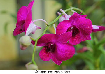 Orchid pink - Pink flowers in the nature