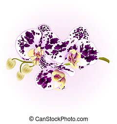 Orchid purple and white spotted stem with flowers vector.eps