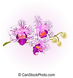 Orchid purple and white vintage  vector.eps