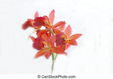 Orchid - red flowers