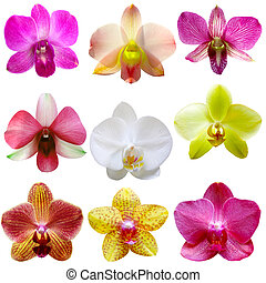 Orchid Set - Collection of orchid flower isolated on white