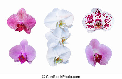 Orchid set with clipping path