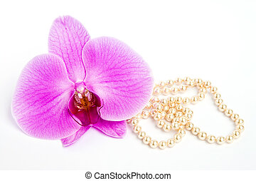 orchid,