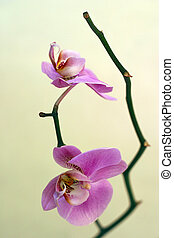 Orchid - The image of an orchid on a yellow dim background...