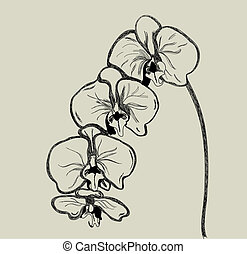 Orchid vector - Hand drawn orchid vector - ink on paper ...