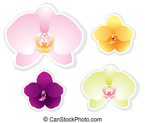 Orchid vector isolated on white