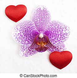 Orchid with hearts on a white background