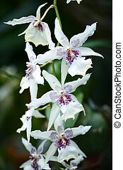 Orchidaceae Flowers - Beautiful White Orchid Flowers....