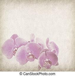 orchidea, disegno, in, grunge, e, stile retro
