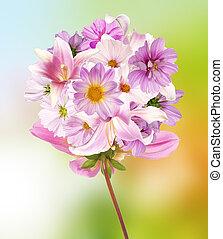 orchidee, bloemen, op, abstract, achtergrond