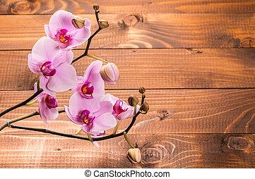 orchidee, bloemen, op, houten, achtergrond