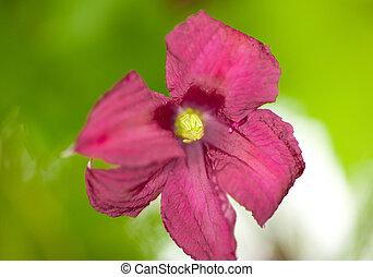 Orchidee - Blumen